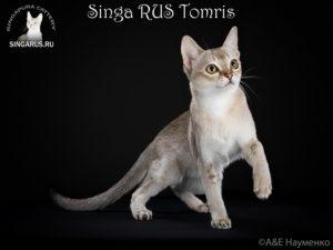 Singa RUS Tomris