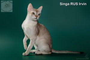 Singa RUS Irvin
