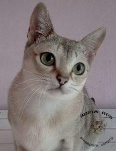 SingaRUS Odetta