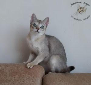 Singa RUS Keiko2