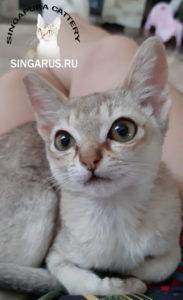 Singa RUS Michelle