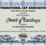 Elmira 2020 THIRD BEST SABLE TICKED TABBY SINGAPURA OF THE YEAR