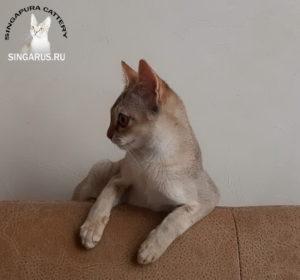 Singa RUS Michelle Merveille