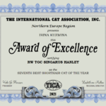SEVENTH BEST SHORTHAIR CAT OF THE YEAR