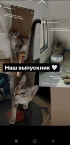 Singa Rus Rave